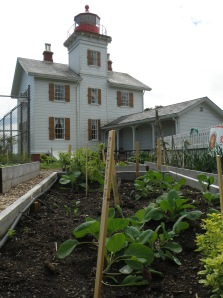 This garden is a historical and cultural gem where students under the direction of Master Gardeners propagate seeds at the Sam Case school green house and plant in June, study nutrition through tasting and harvest in fall. The garden is a collaboration between Lincoln County Master Gardeners™, Sam Case Elementary School, Oregon State Parks & Recreation, Friends of Yaquina Lighthouses and community supporters.